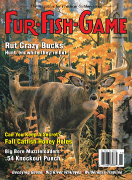 November 2004 whitetail deer