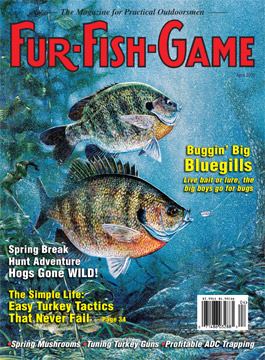April 2005 Bluegill