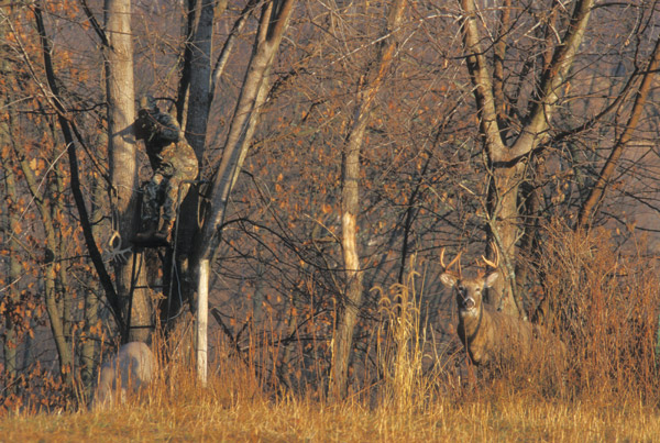 Deer Hunting from treestand