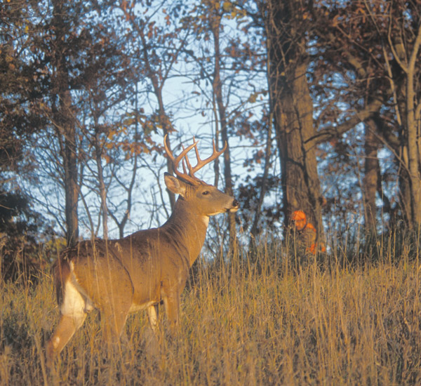 Hunting Whitetails from the Ground