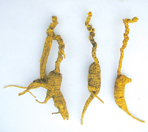 Woods Grown Ginseng Root