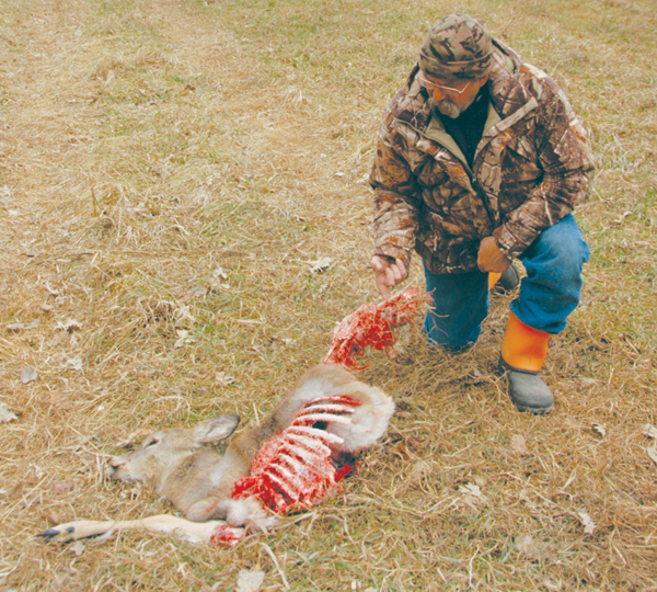 Hunting coyote to save deer