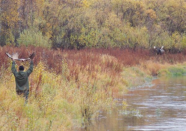 Fur fish game wilderness adventure survival calling an alaskan moose within 30 yards solutioingenieria Gallery