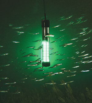 Aqua-Vu Bio-Lume portable submersible fish-attracting light