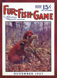 November 1937 Irish Setter with pheasant