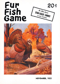 November 1955 turkeys