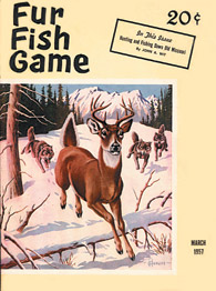 March 1957 wolves chasing deer