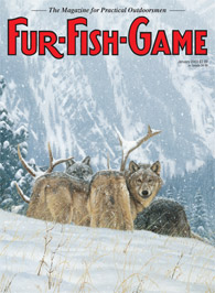 January 2003 Wolves devour an elk